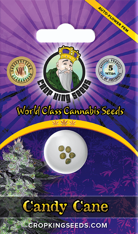 Candy Cane Autoflower Marijuana Seeds