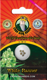 White Banner Feminized  Marijuana Seeds