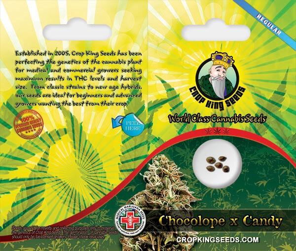 Chocolope-x-Candy 600 x 500