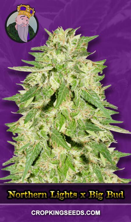 Northern Lights x Big Bud Autoflower Marijuana Seeds