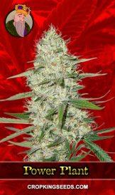 Power Plant Feminized Marijuana Seeds
