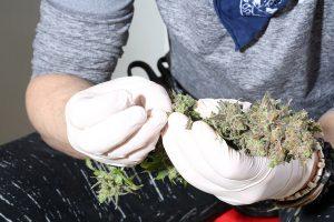 how to buy marijuana seeds legally