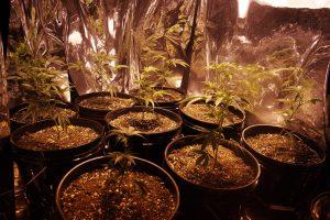 Cheap Indoor Grow Set Up