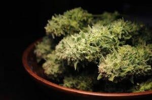 Guide to Curing Marijuana