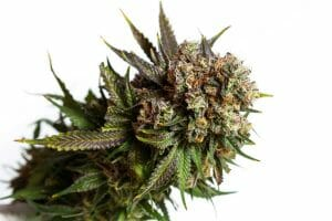 Knowing the Hybrid Weed