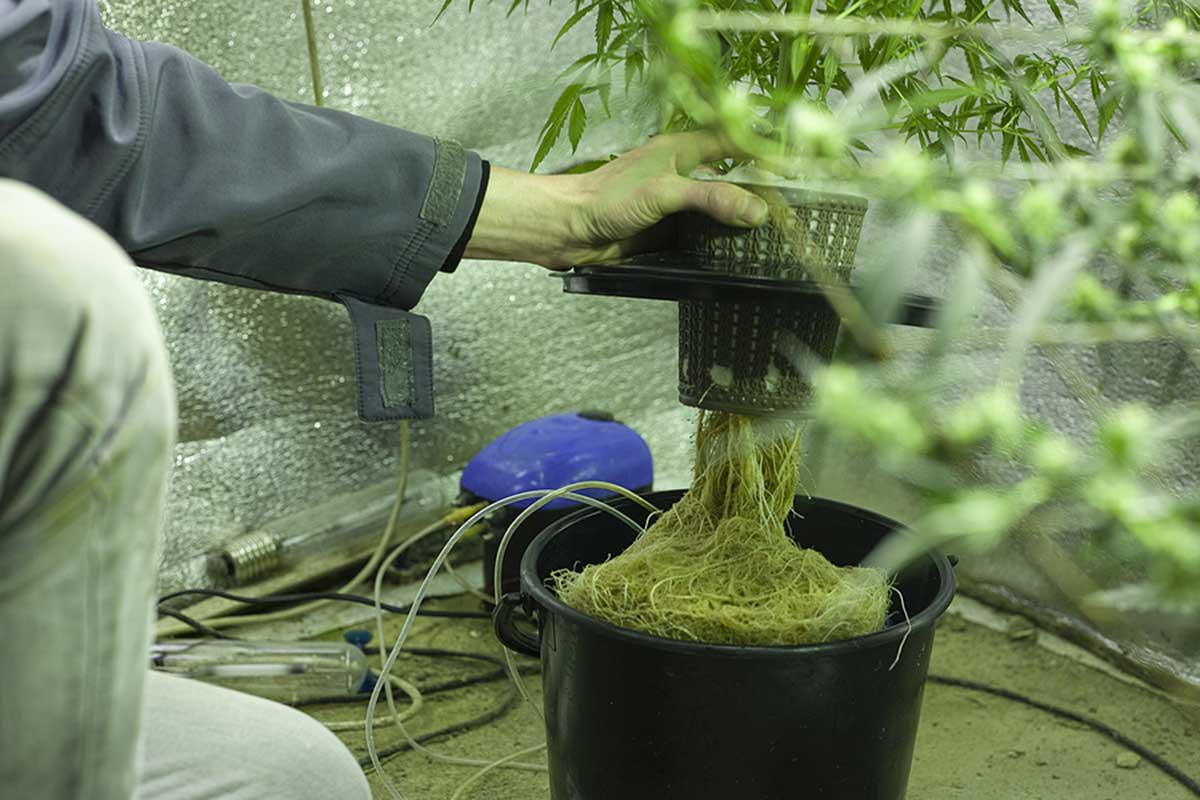 Hydro weed guide for growers