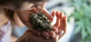 Marijuana Smell