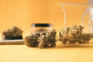 Best Marijuana