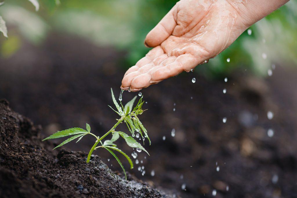 Bigstock Male Farmer Watering Bush Gree 386373793 1024x683