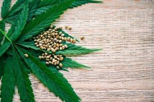 Cannabis Review