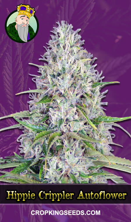 Hippie Crippler Autoflowering Marijuana Seeds
