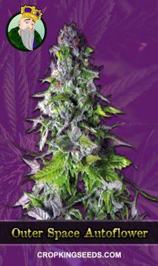 Outer Space Autoflowering Marijuana Seeds