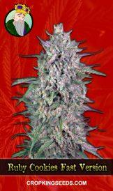 Ruby Cookies Fast Version Marijuana Seeds