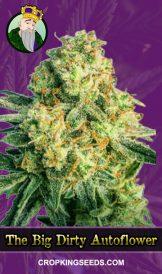 The Big Dirty Autoflowering Marijuana Seeds