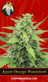 Agent Orange Feminized Marijuana Seeds
