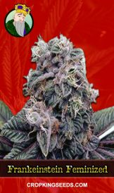Frankenstein Feminized Marijuana Seeds