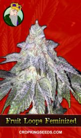 Fruit Loops Feminized Marijuana Seeds