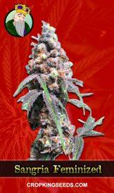 Sangria Feminized Marijuana Seeds