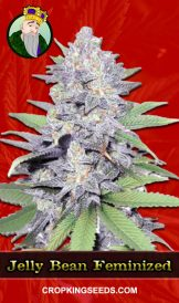 Jelly Bean Feminized Marijuana Seeds