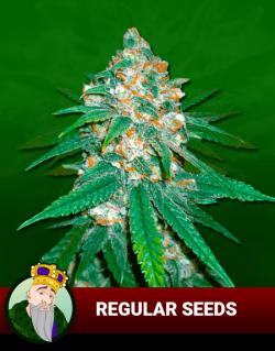 Regular Seeds P5vid85bxyu8hoi2yg0zilmpvlni5frjj07orjwnp2
