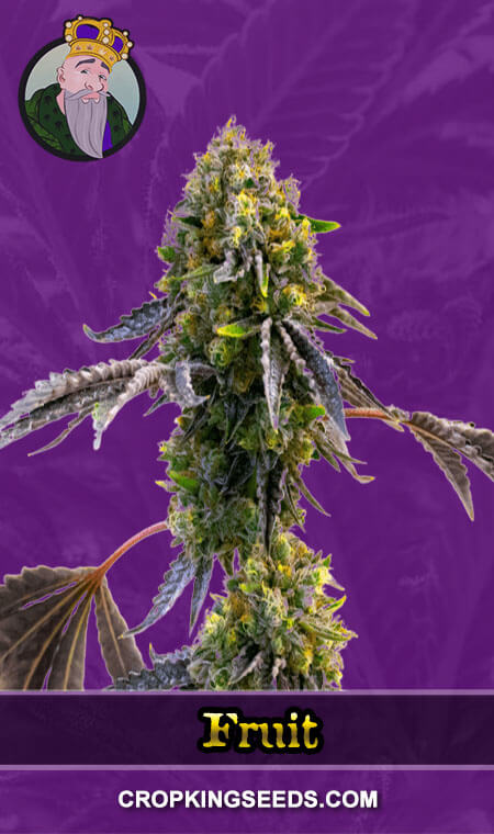 Fruit Autoflower Marijuana Seeds