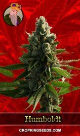 Humboldt Feminized Marijuana Seeds