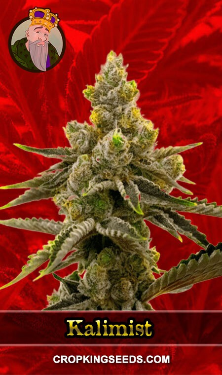 Kalimist Feminized Marijuana Seeds