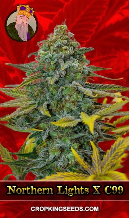 Northern Lights X C99 Feminized Marijuana Seeds