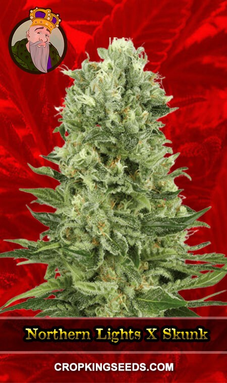 Northern Lights x Skunk Feminized Marijuana Seeds