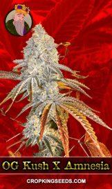 OG Kush x Amnesia Feminized Marijuana Seeds