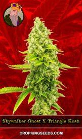 Skywalker Ghost X Triangle Kush Feminized Marijuana Seeds