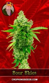 Sour Skies Feminized Marijuana Seeds