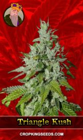 Triangle Kush Feminized Marijuana Seeds