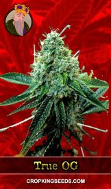 True OG Feminized Marijuana Seeds