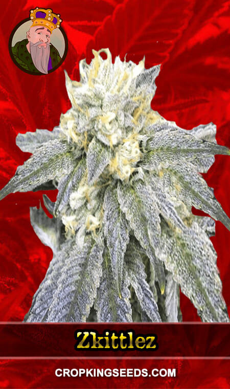 Zkittlez Feminized Marijuana Seeds