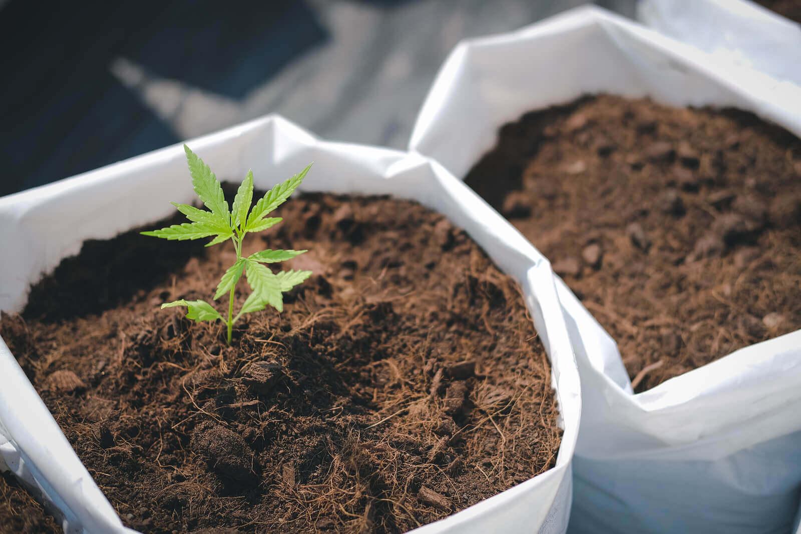 best soil for growing marijuana indoors