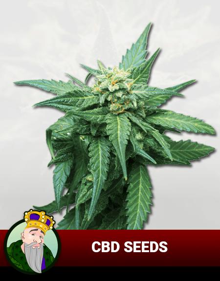 CBD Growers
