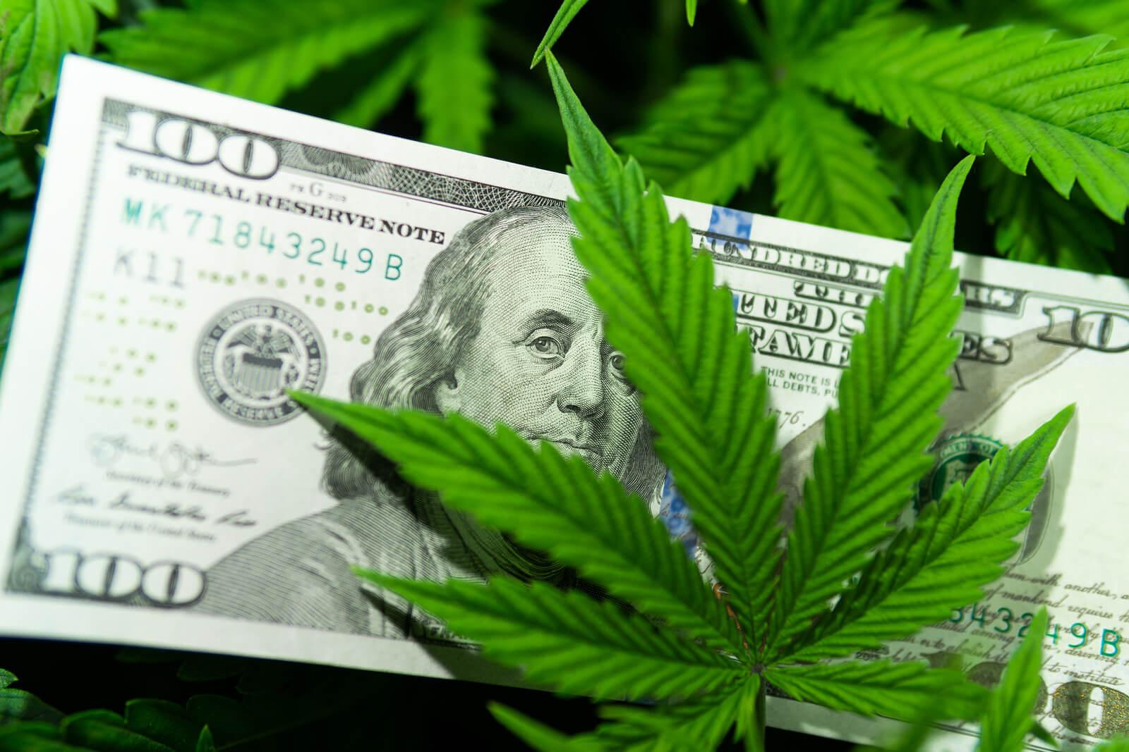 marijuana seeds USA