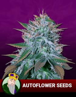 autoflowering seeds